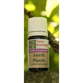 Huile essentielle Aneth plante
