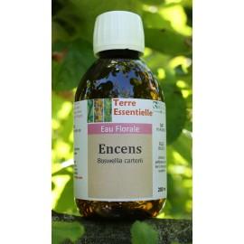 Hydrolat Encens