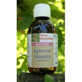 Hydrolat Epinette blanche
