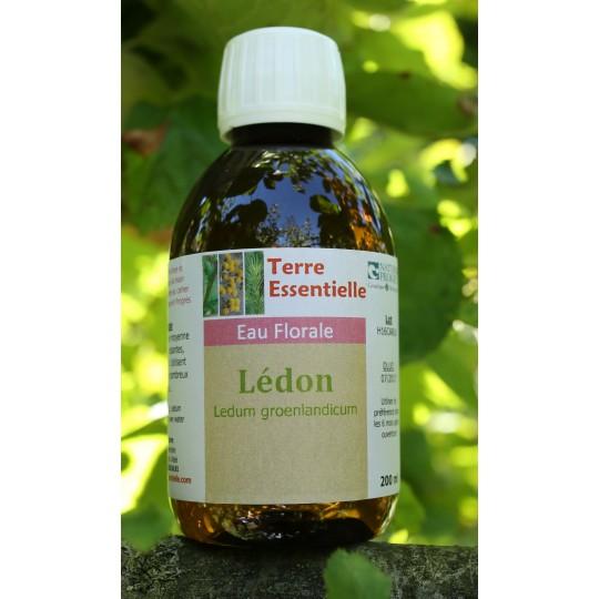 Hydrolat Ledon