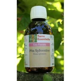 Hydrolat Pin sylvestre