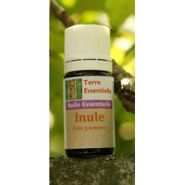 Huile essentielle Inule